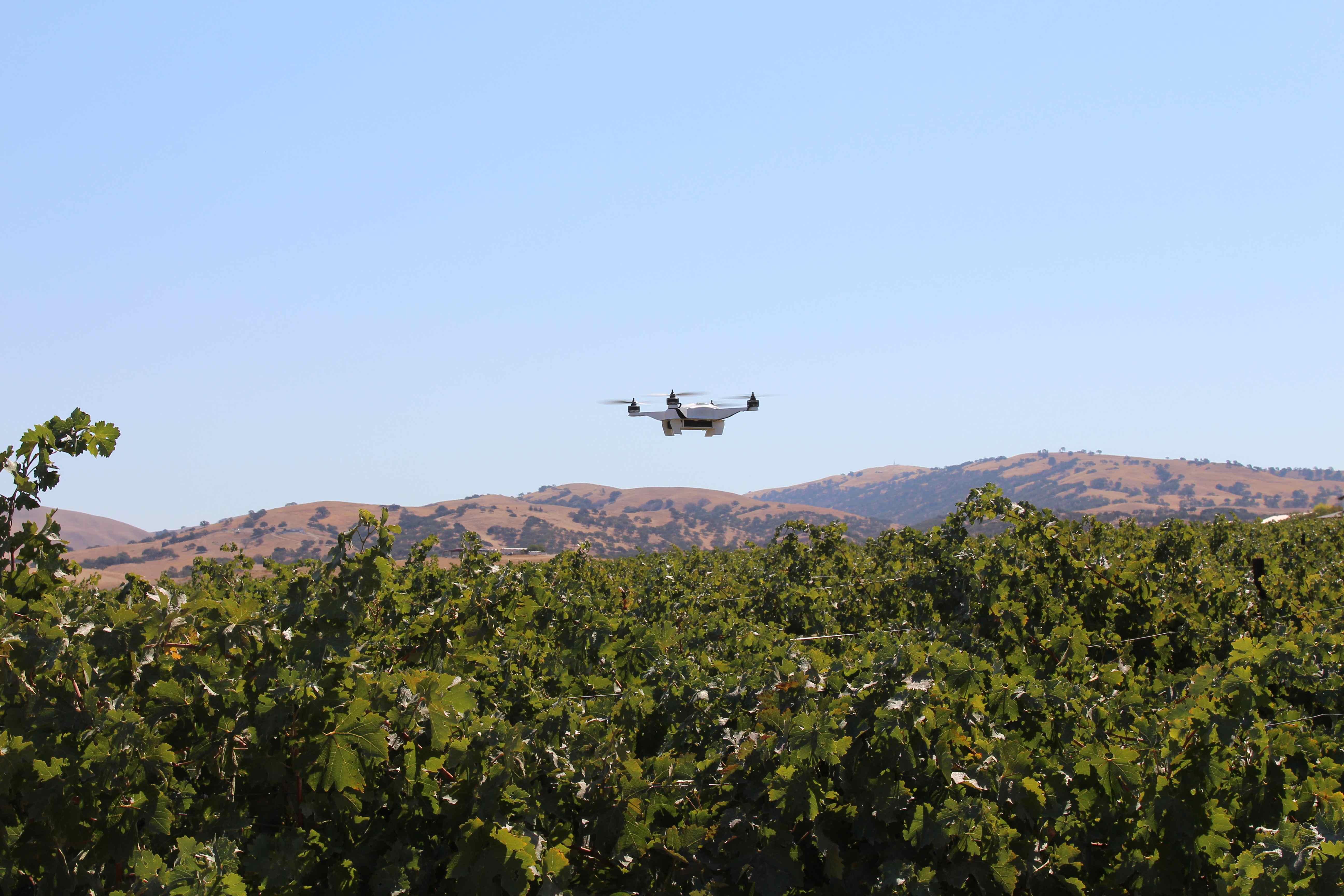 drone in vineyard.jpg